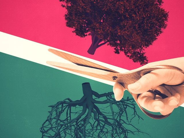 Roots.png effected.png?ixlib=rails 0.3