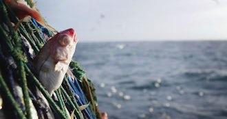 Fishcaughtinfishingnetgetty large.jpg?ixlib=rails 0.3