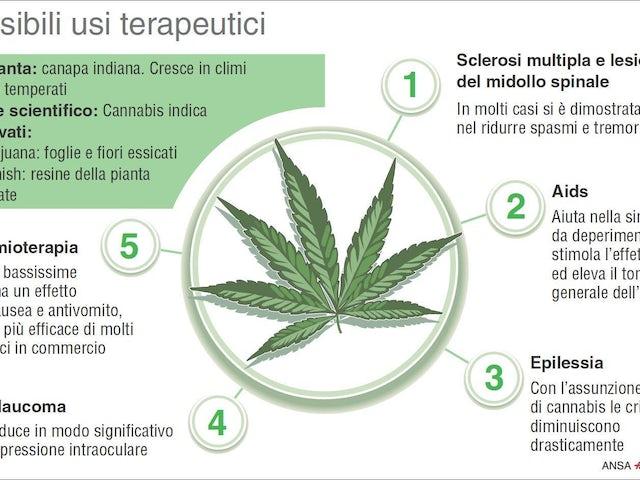Cannabis.jpg?ixlib=rails 0.3