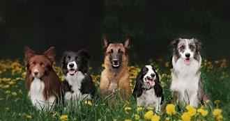 Dogs.jpg?ixlib=rails 0.3