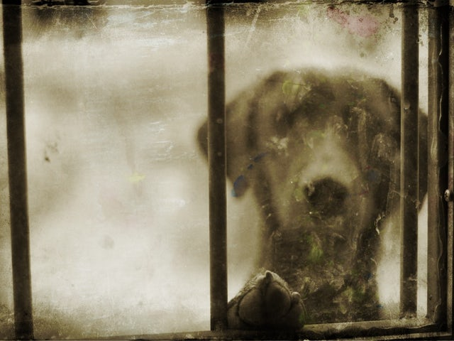 Adorable chien a la fenetre.jpg?ixlib=rails 0.3