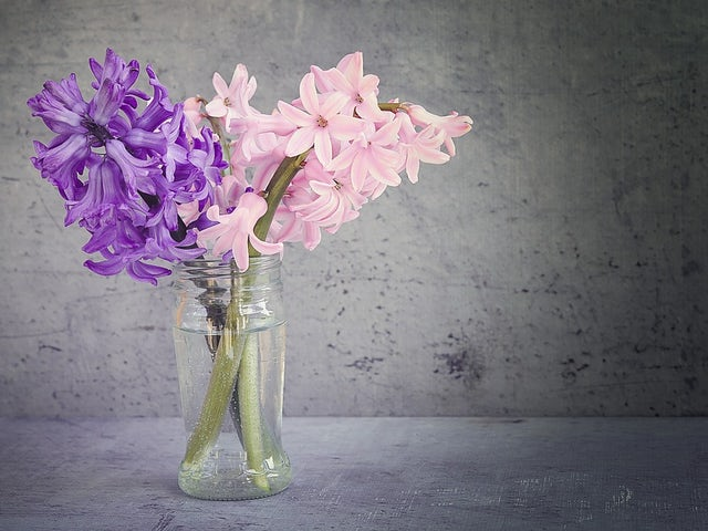 Hyacinth 1359538 960 720.jpg?ixlib=rails 0.3